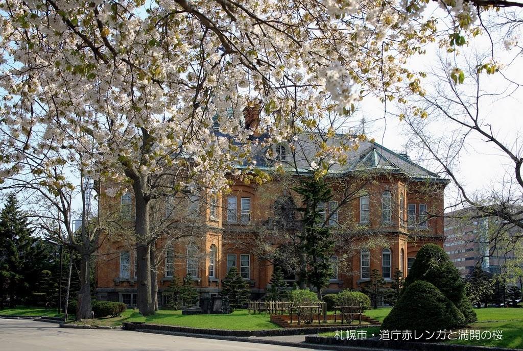 お花見情報 さんぽろ 桜と美人に会いに行こう 赤レンガ庁舎 (5月上〜中旬)  札幌