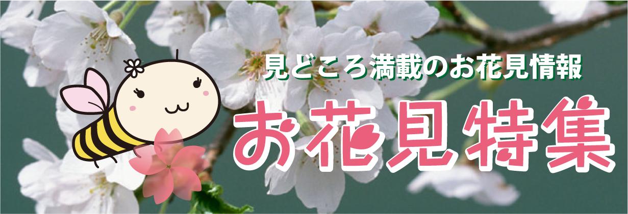 北海道もようやく春らしくなってきましたね。あなた情報マガジンびもーるでは2013年のでは、北海道や札幌各地の桜の名所を中心にお花見スポットやお花見イベントの情報をご紹介。みんなでお花見して、北海道の春を満喫しよう!
