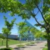 樹木管理サポーターのサクラの森案内 サクラツアー モエレ沼公園 (5/6)