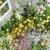 接ぎ木という複製の運命を持つ姿 芦川洋写真展桜心はなごころ 大通 (3/24〜29)