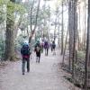 自然を楽しみながら 週末はゆっくり登山 厚別区 (4/22)
